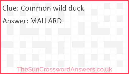 Common wild duck Answer