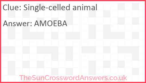 Single-celled animal Answer