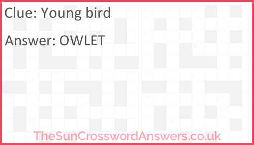 Young bird Answer