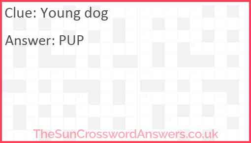 Young dog Answer